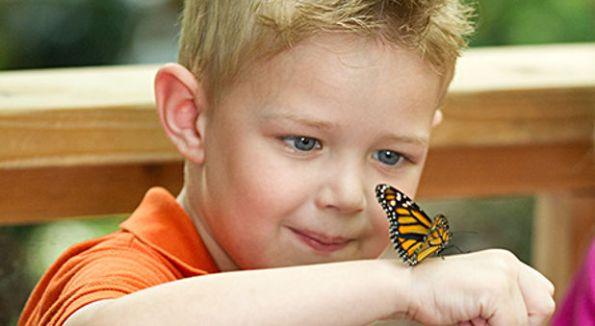 cielo_es_real_mariposa