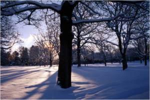 bosque_nieve